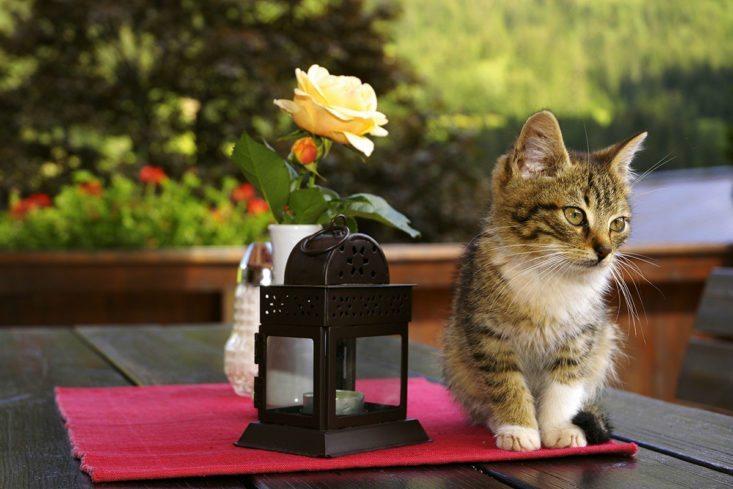 Katze - Natur- & Familienresort Der Stieglerhof, Ihr 3 Sterne Hotel in Radstadt
