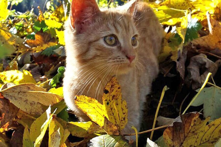 Katze im Natur- & Familienresort Der Stieglerhof in Radstadt
